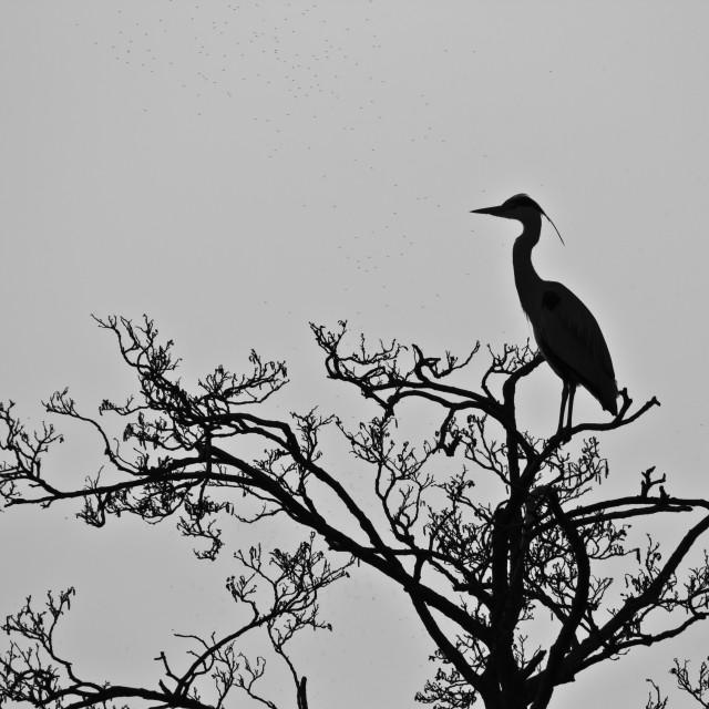 """""""Heron Silhouette"""" stock image"""