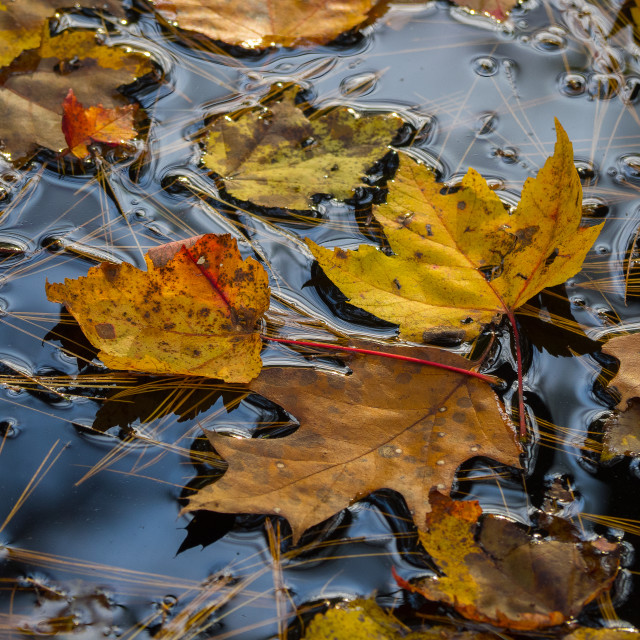 """Floating leaves"" stock image"