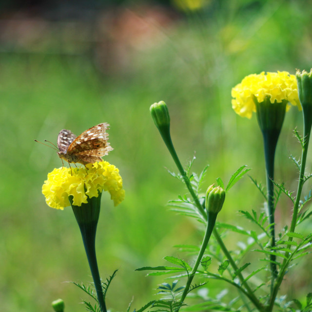 """""""butterfly 