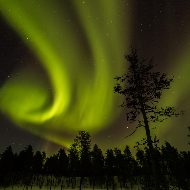 """""""Northern light in Finland"""" stock image"""