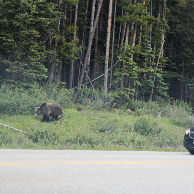 """Roadside Bear"" stock image"