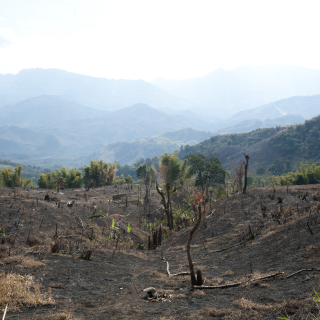 """""""Desecration across beautiful Naga hills from the government slash and burn..."""" stock image"""