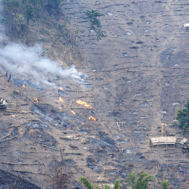 """""""Workers' huts on Naga hillside being desecrated by the govenment slash and..."""" stock image"""