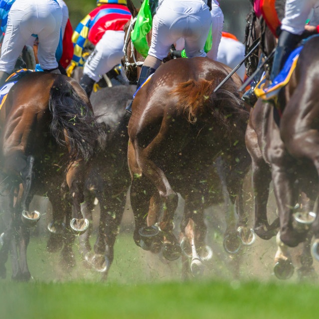 """Horse Racing Legs Hoofs"" stock image"