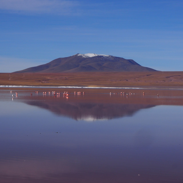 """Laguna Colorada, Bolivia"" stock image"
