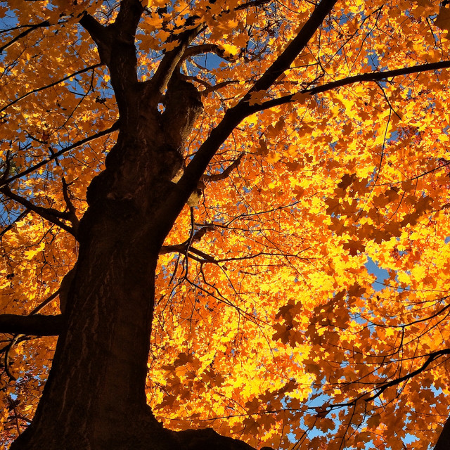 """Golden autumn light"" stock image"
