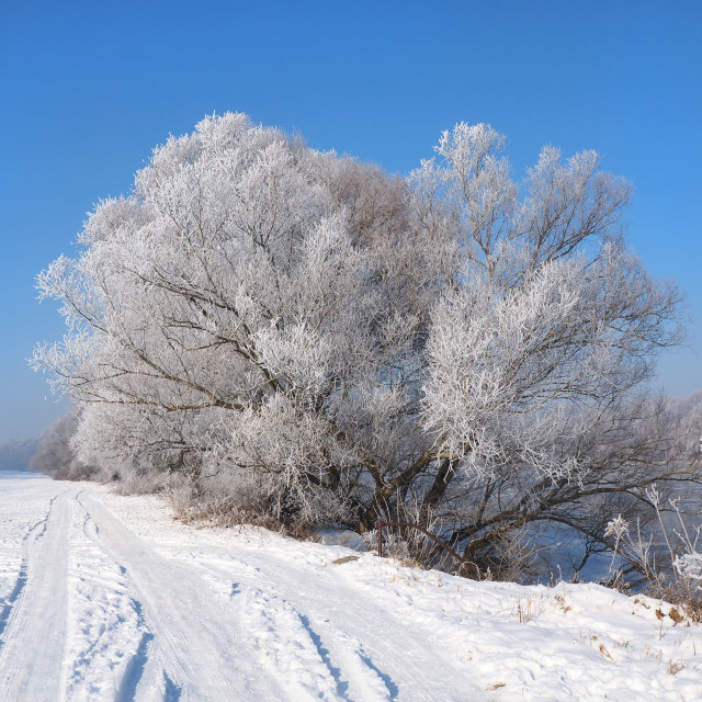 """""""river under the ice and tree branches covered with white frost"""" stock image"""