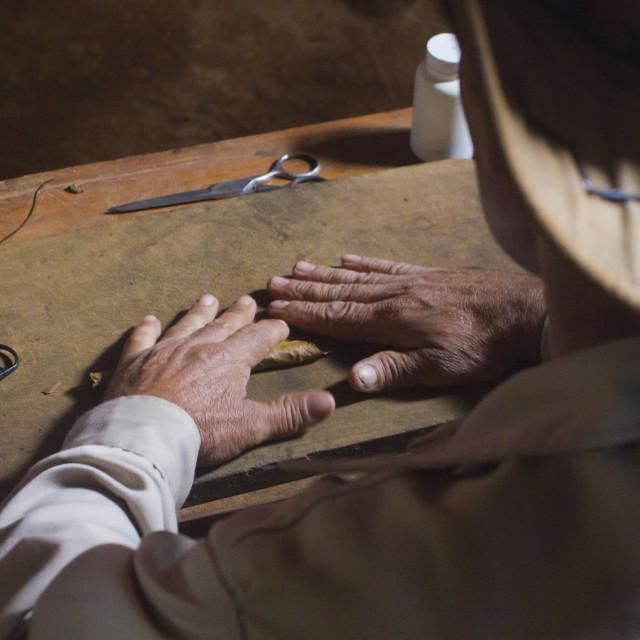 """A cuban farmer making a cigar with this hands in Pinar del Rio, Cuba"" stock image"