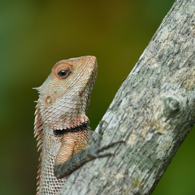 """Lizard"" stock image"