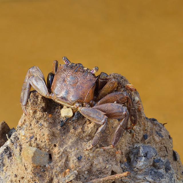 """Crab"" stock image"