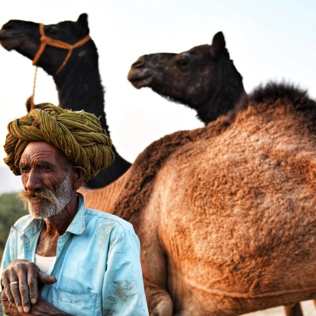 """""""Camel herder"""" stock image"""