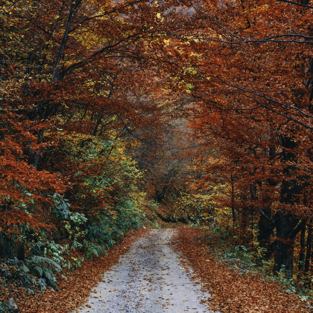 """""""If you take this road, you'll get to Fall Country"""" stock image"""