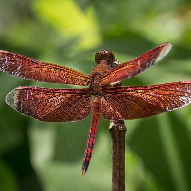 """Dragonfly beauty"" stock image"