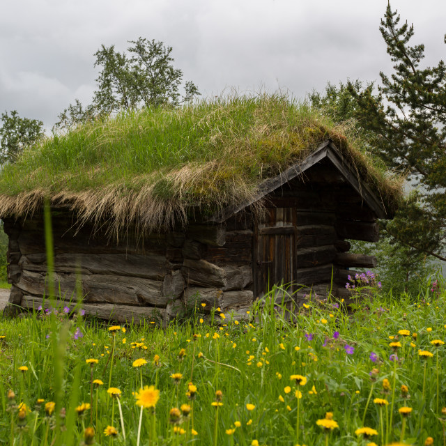 """""""Wooden grass-roofed-house in Norway"""" stock image"""