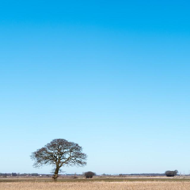 """Lone tree in a stubble field"" stock image"