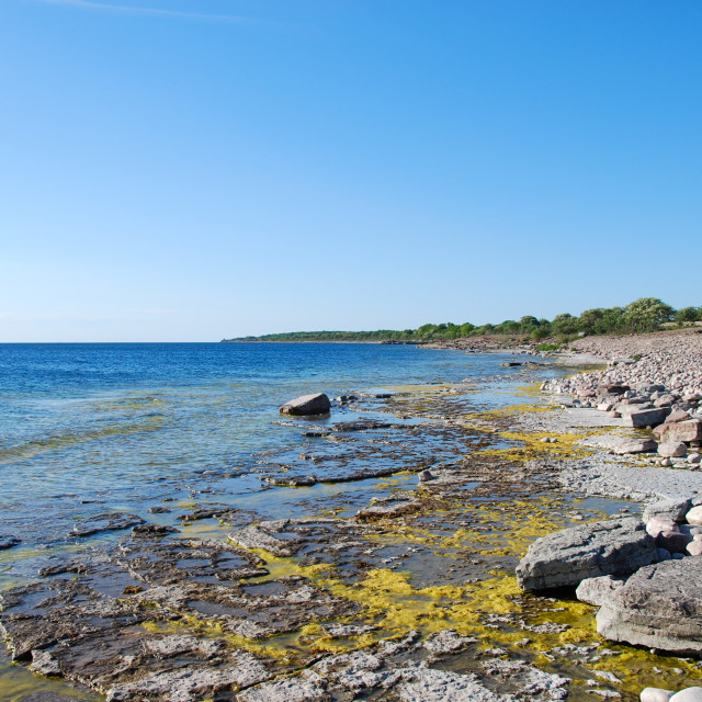 """Flat rock coast at the island Oland in Sweden"" stock image"