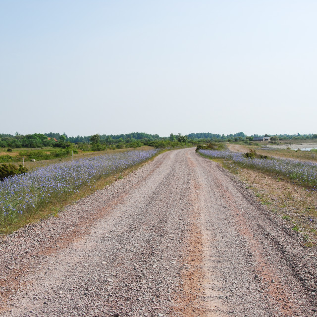 """Gravel road surrounded of blue flowers"" stock image"
