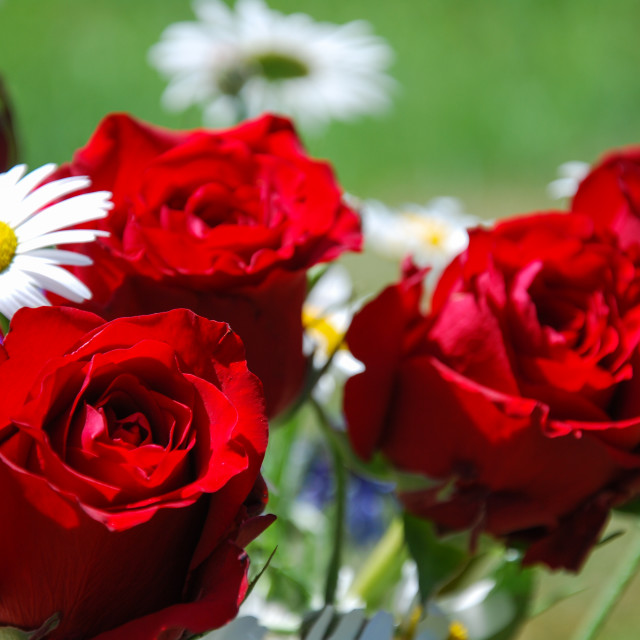 """""""Bunch with red roses"""" stock image"""