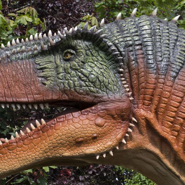 """Megalosaurus Closeup"" stock image"