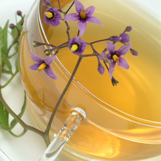 """Medicinal tea made of Bittersweet, Solanum dulcamara, Dulcamara"" stock image"
