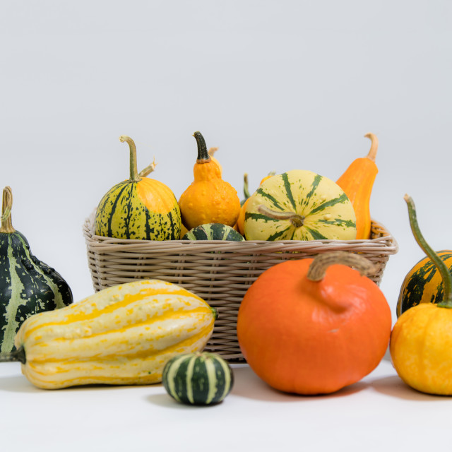 """Various ornamental pumpkins"" stock image"