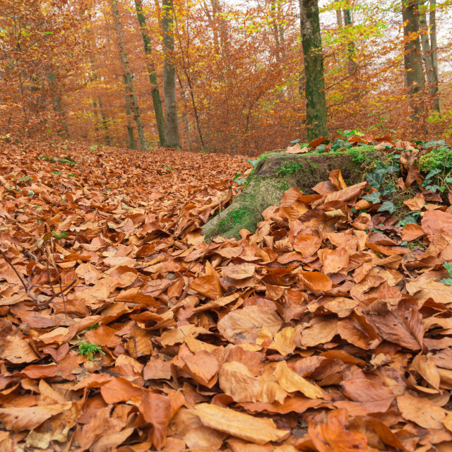 """""""Path through the forest 6"""" stock image"""