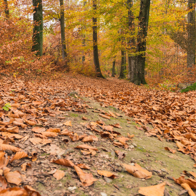 """""""Path through the forest 1"""" stock image"""