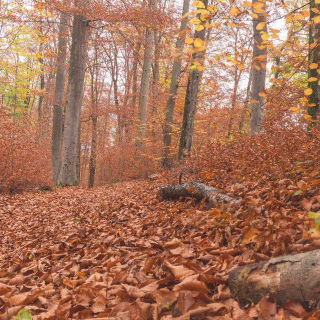 """""""Path through the forest 7"""" stock image"""