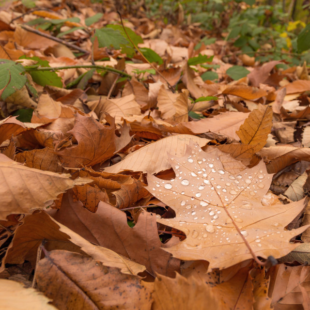 """""""Rain drops on the leaf. Ch"""" stock image"""