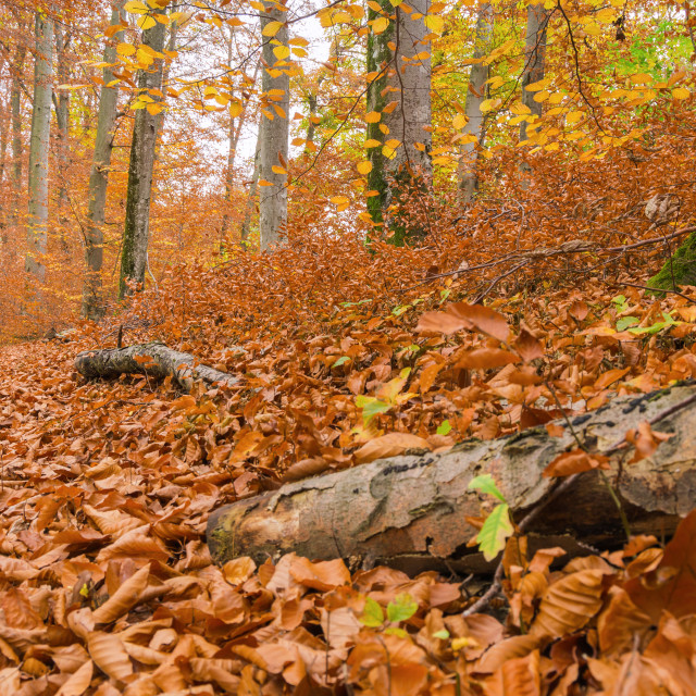 """""""Path through the forest 8"""" stock image"""
