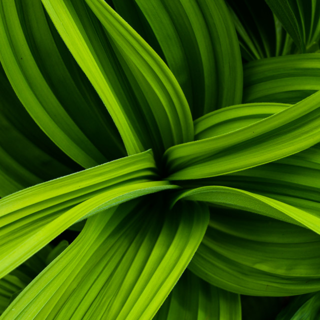 """Green"" stock image"