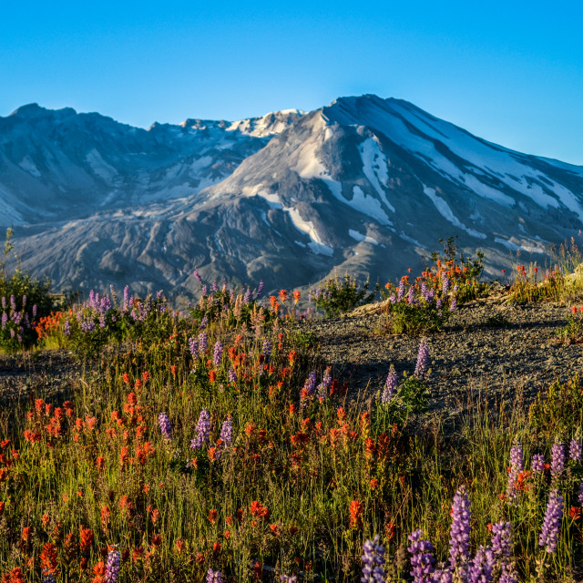 """Mt. St. Helens Morning"" stock image"