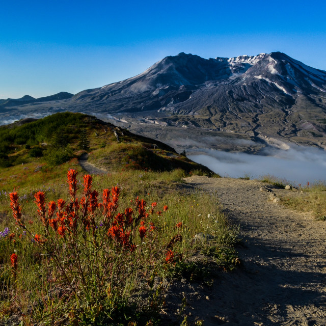 """Trail to Mt. St. Helens"" stock image"
