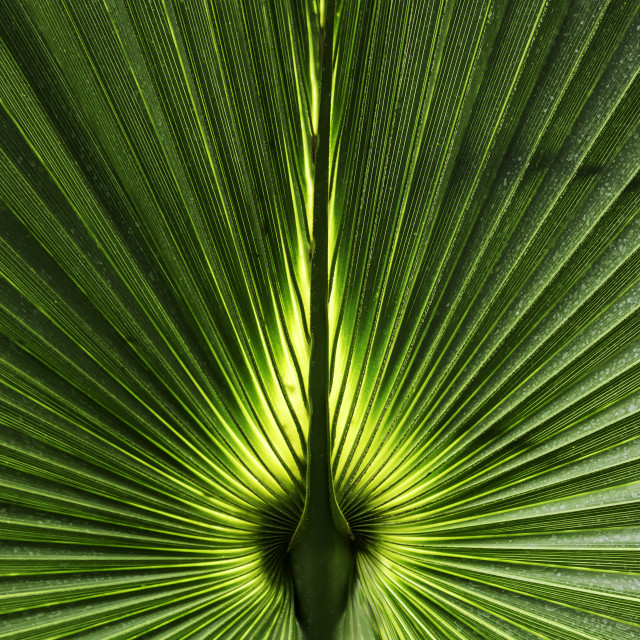 """Palm Leaf Detail"" stock image"