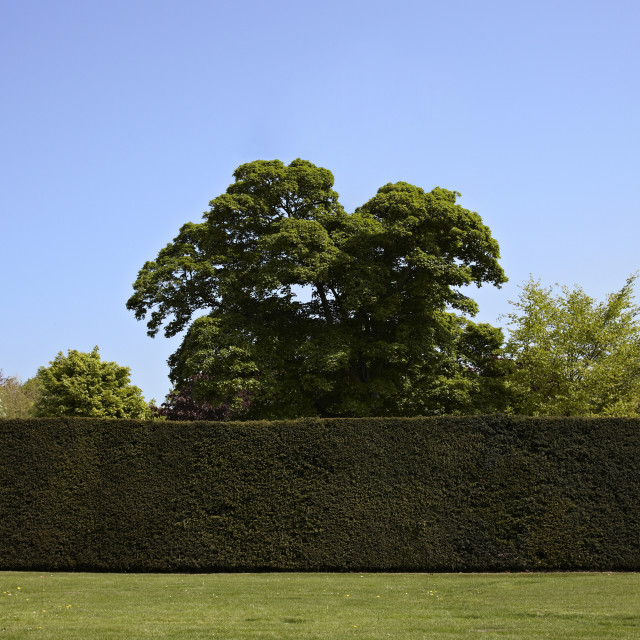 """English formal garden"" stock image"