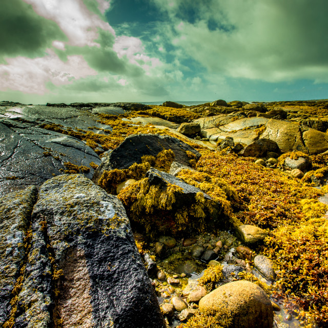 """rocky foreshore"" stock image"