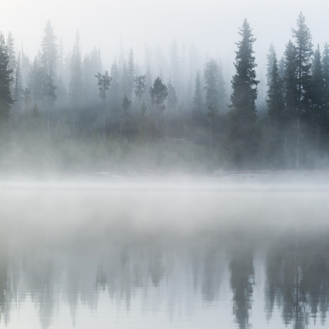"""Foggy Forest Lines Lake Shore"" stock image"