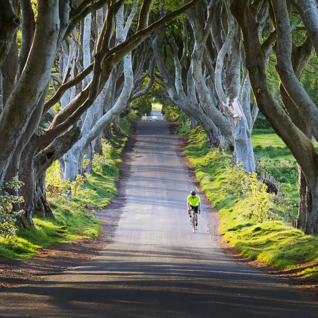 """Through the Dark Hedges"" stock image"
