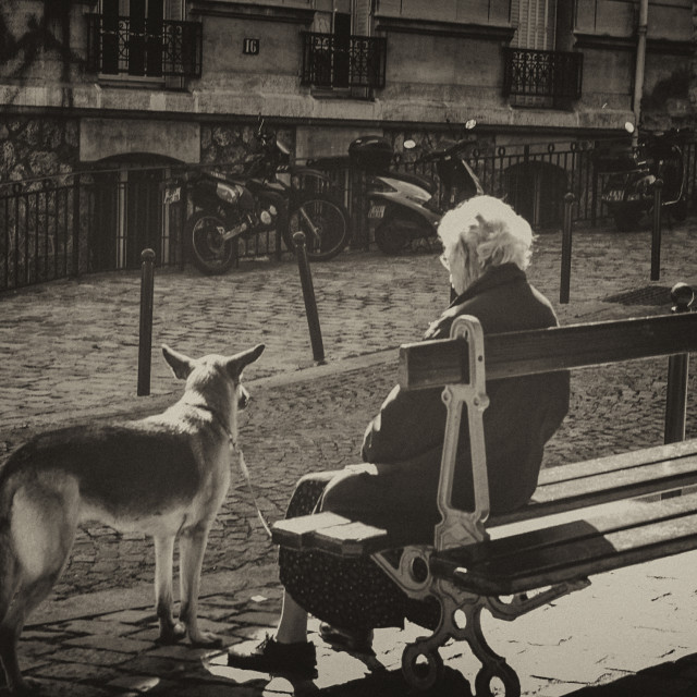 """Senior woman with dog on a bench"" stock image"