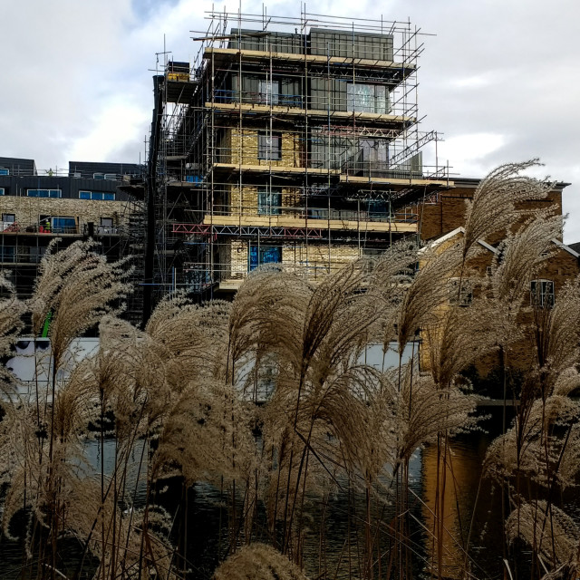 """""""Supporting structures - scaffolding and reeds"""" stock image"""