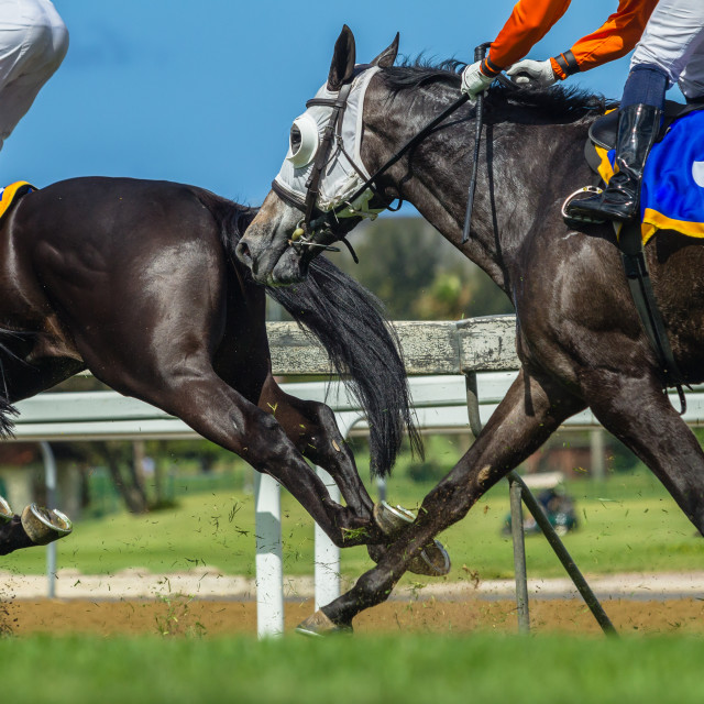"""Horse Racing Action Legs Heads"" stock image"