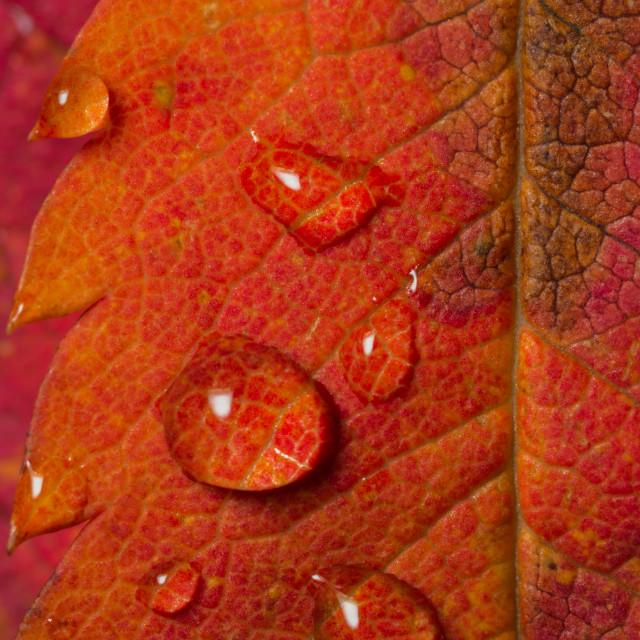 """""""Pink & Orange"""" stock image"""