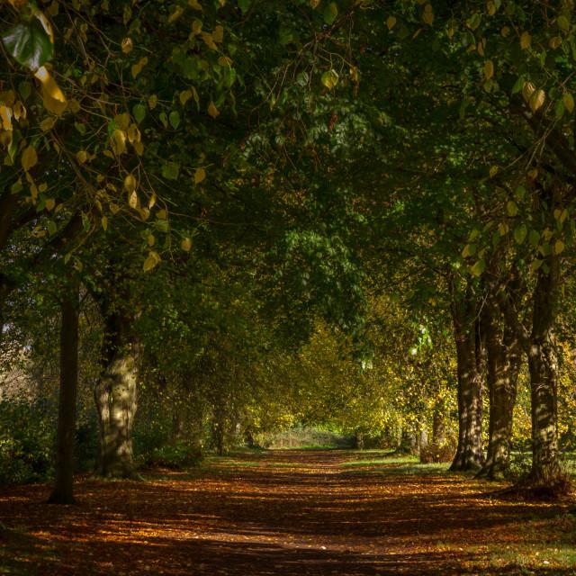 """""""Avenue, Farnham Park"""" stock image"""