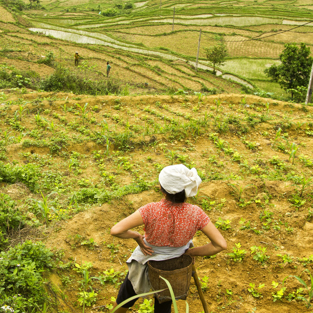 """Farm Land"" stock image"