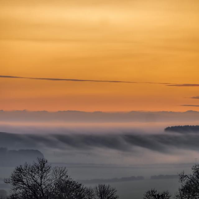 """""""Cranbourne Chase Fog, Dorset, UK"""" stock image"""