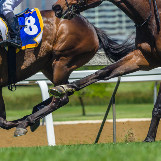 """Horse Racing Action Hoofs Legs Heads"" stock image"