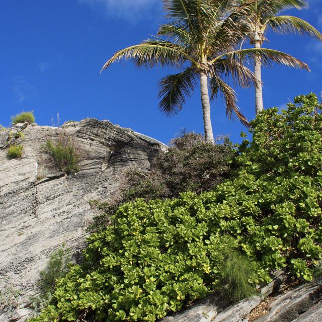 """""""Bermuda rock"""" stock image"""