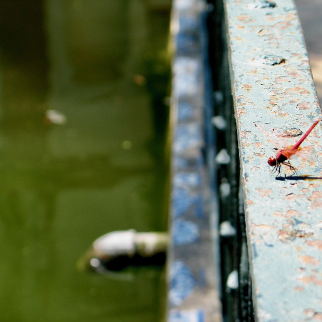 """Dragonfly on rusty railing"" stock image"