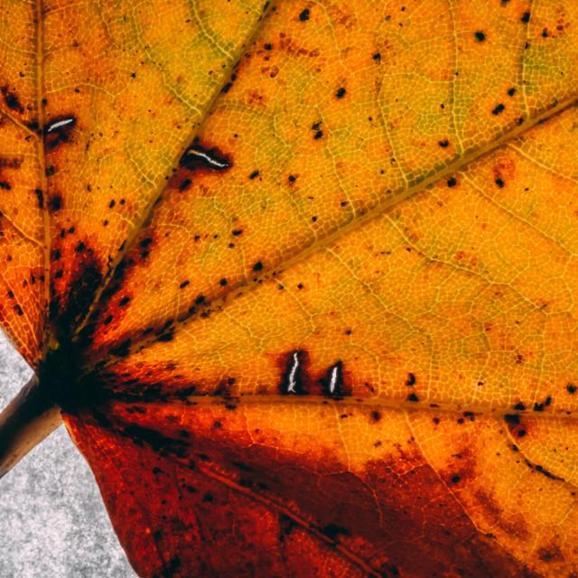 """Autumn leaf"" stock image"