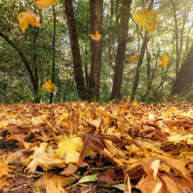 """Falling Autumn Leaves"" stock image"